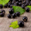 New Zealand Blackcurrants reduce cardiac risk factors in metabolic syndrome patients